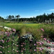 Flowers growing in the rough of the course