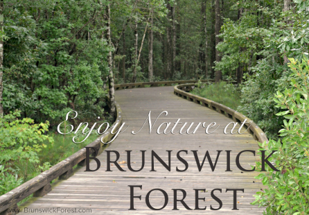 ENJOY NATURE AT BRUNSWICK FOREST