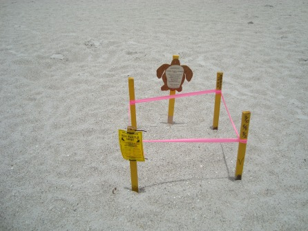 TURTLE HATCHING SIGN