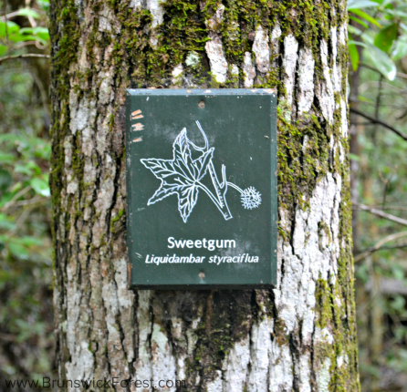 SWEETGUM SIGN