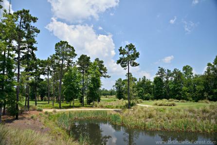 NATURAL AREA GRASSES AND VEGETATION
