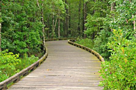 Nature boardwalk